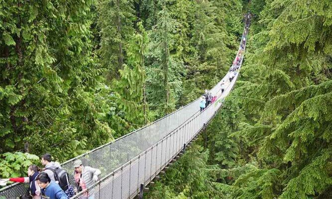 Capilano-Suspension