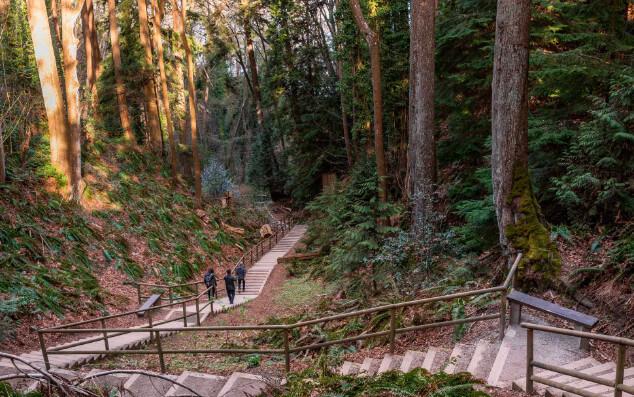 cong-vien-Pacific-Spirit-Regional-Park